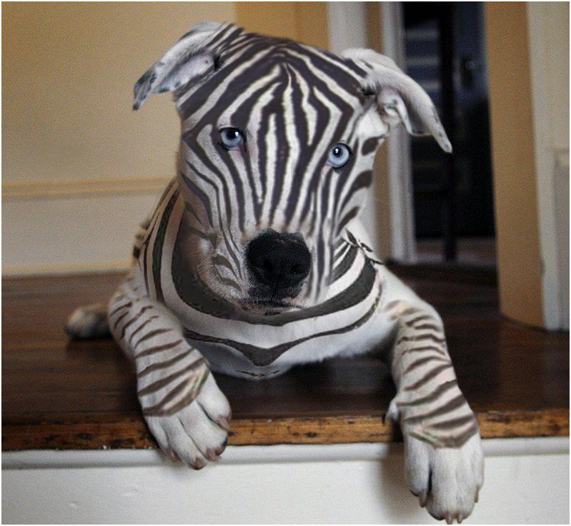 Amazoncom Webkinz Tie Dyed Puppy Toys amp Games