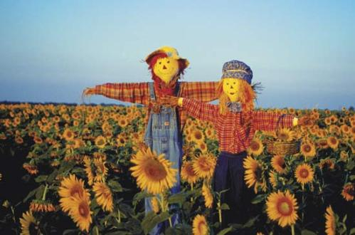Scarecrow Field