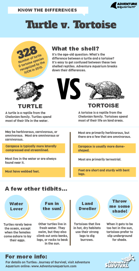 turtles-vs-tortoises1