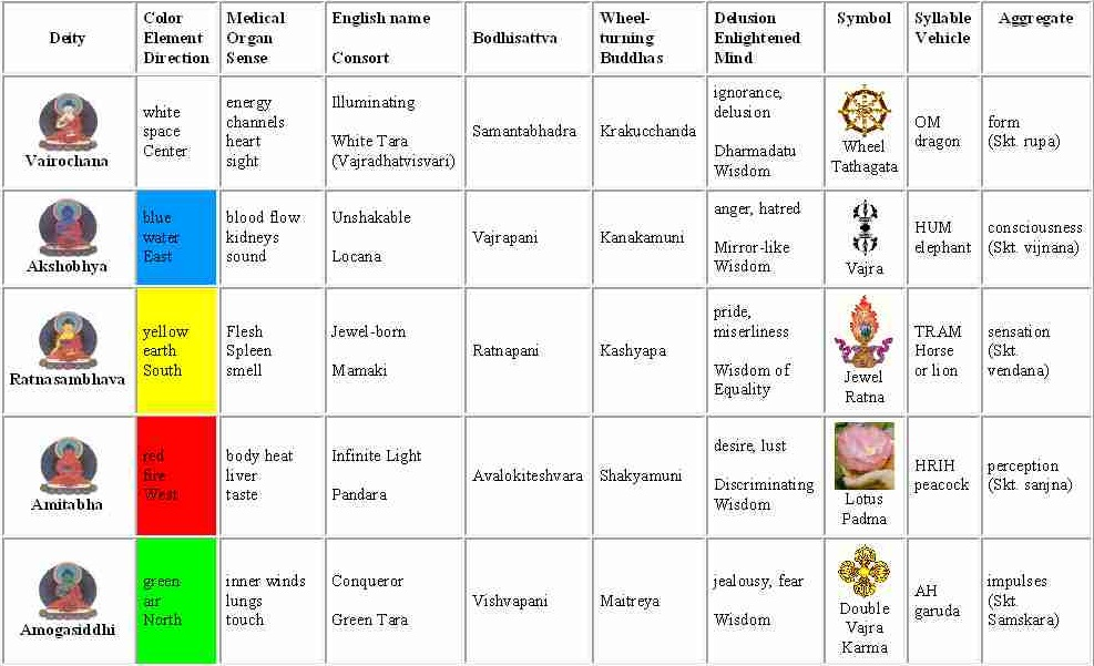 Five Buddhas, Deity, Color, Element, Direction, Sense, Medical, Organ, English name, Consort, Bodhisattva, Wheel-turning Buddhas, Delusion, Enlightened Mind, Symbol, Syllable, Vehicle, Aggregate, Vairochana, white, space, Center, sight, energy channels, heart, Illuminating, White Tara, Vajradhatvisvari, Samantabhadra, Krakucchanda, ignorance, delusion, All-encompassing, Dharmadatu, Wisdom, Wheel, Tathagata, OM, dragon, form, rupa, Sanskrit, Akshobhya, blue, water, East, sound, blood flow, kidneys, Unshakable, Locana, Vajrapani, Kanakamuni, anger, hatred/, Mirror-like, Wisdom, Vajra, HUM, elephant, consciousness, vijnana, Ratnasambhava, yellow, earth, South, smell, Flesh, spleen, Jewel-born, Mamaki, Ratnapani, Kashyapa, pride, miserliness, Wisdom of Equality, Jewel, Ratna, TRAM, Horse, lion, sensation, vendana, Amitabha, red, fire, West, taste, body, heat, liver, Infinite Light, Pandara, Avalokiteshvara, Shakyamuni, desire, lust, Discriminating, Wisdom, Lotus, Padma, HRIH, peacock, perception, sanjna, Amogasiddhi, green, air, North, touch, inner winds, lungs, Conqueror, Green, Tara, Vishvapani, Maitreya, jealousy, fear, All-accomplishing Wisdom, Double Vajra, Karma, AH, garuda, impulses, Samskara