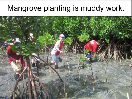 Orange Werefox Planting Mangroves 3