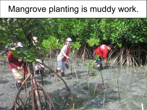Orange Werefox Planting Mangroves 3