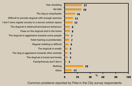 Pets in the City-Graph-Common Problems