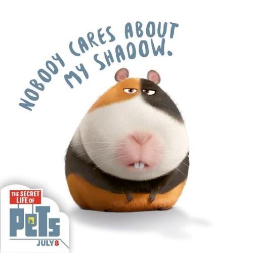 The Secret Life of Pets-Norman