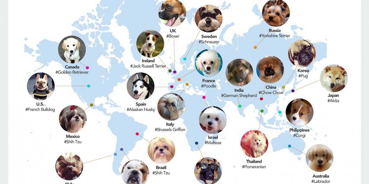Physics Dog Names