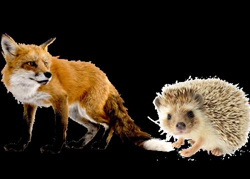 fox-and-hedgehog